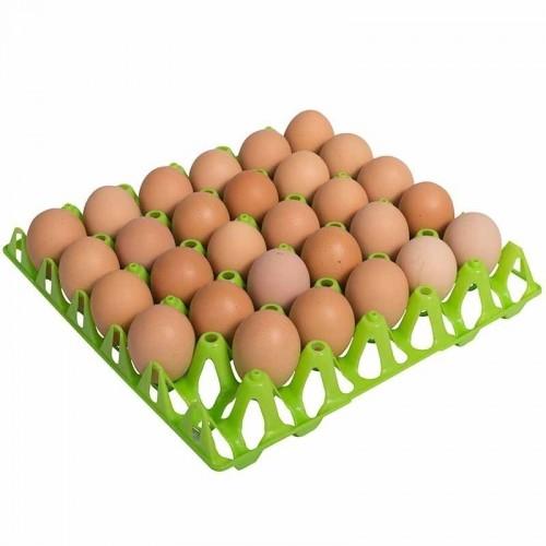 Bandeja de Plástico para Huevos