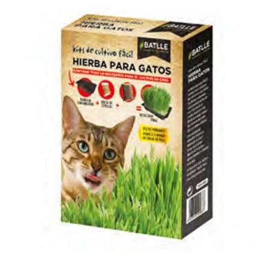 Hierba para gatos Graminae...