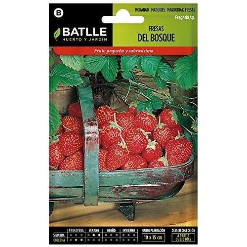 Semillas - Fresas del Bosque Batlle