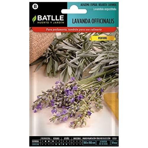 Semillas Aromáticas - Lavanda officinalis