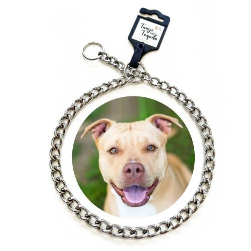 Collar metálico para perro adiestramiento cadena