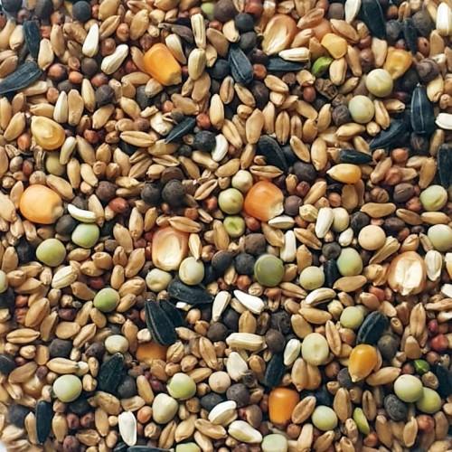 Comida natural para Palomas y Tórtolas